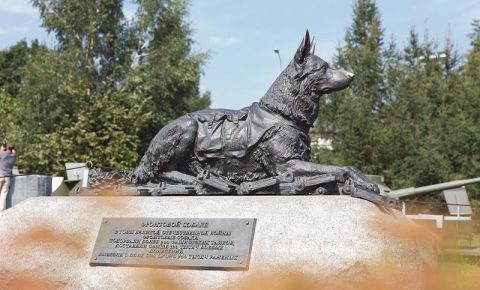 Музей Победы расскажет о фронтовых подвигах собак