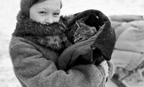 День петербургских котов и кошек, которые помогали пережить блокаду